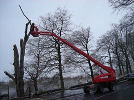 tree surgeons west lothian