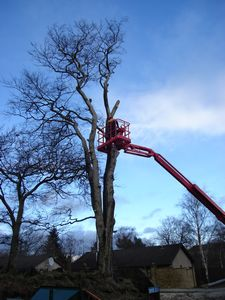 take down and removal of dangerous tree west lothian